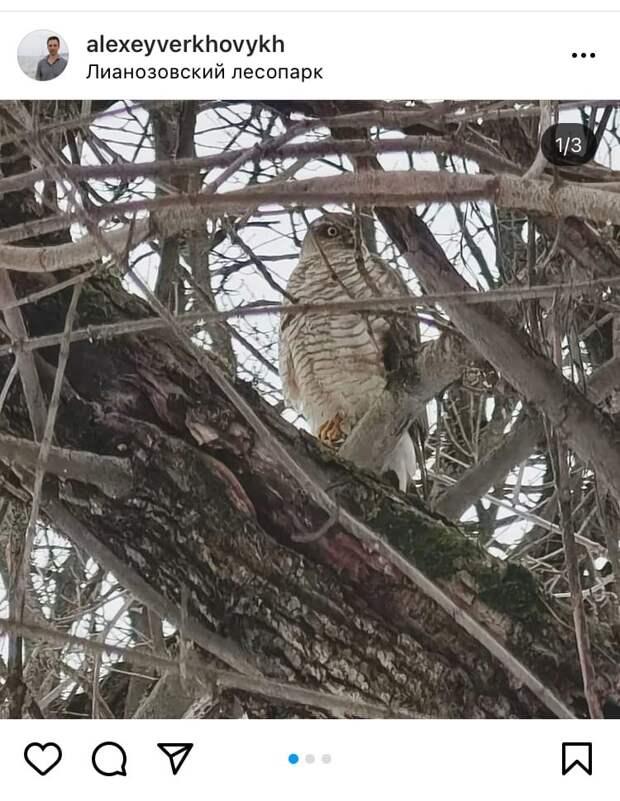 Фото дня: сокол в Лианозовском парке