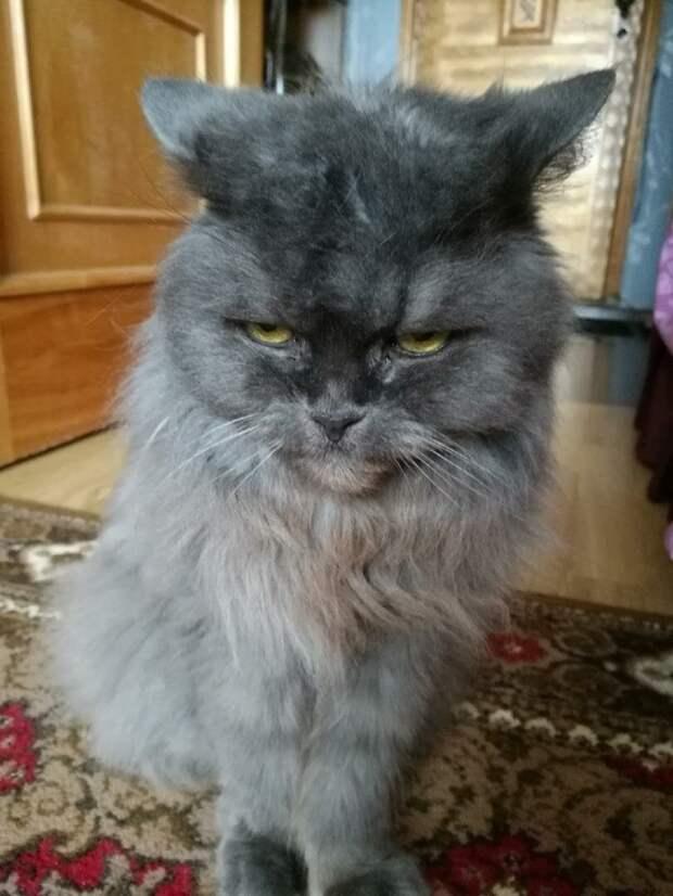 В шутку попросили кошку разбудить нас утром и она разбудила. Решили поэкспериментировать
