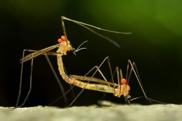 insects48 Портреты насекомых
