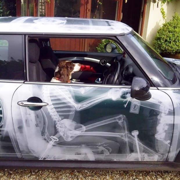 Скелет на автомобиле автоприкол, творчество, тюнинг