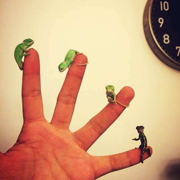 cute-baby-chameleons-69-5835e75cc1396__700