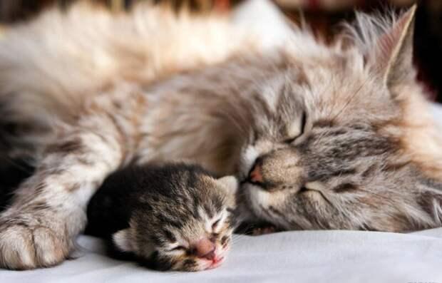 7. Мама вашей кошки с вами не знакома. жены, интересное, кошки, юмор