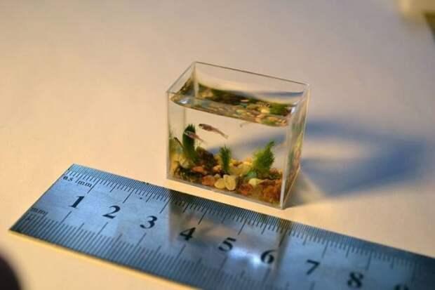 Крохотный аквариум