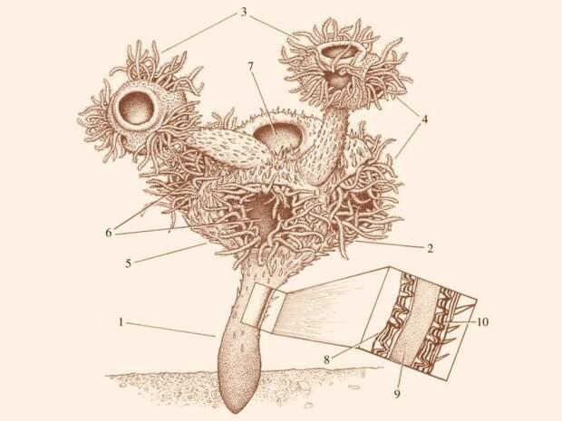 Живший около 547 миллионов лет назад намакалатус признан связующим звеном между эдиакарской биотой и последующими многоклеточными животными