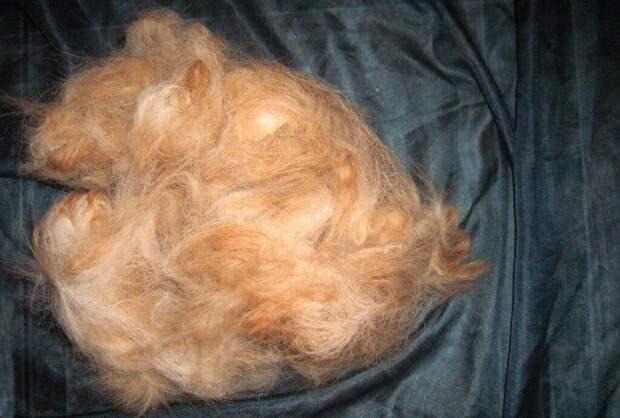 Нечаянно увидела, как муж разбрасывал собачью шерсть по квартире, чтобы избавиться от питомца