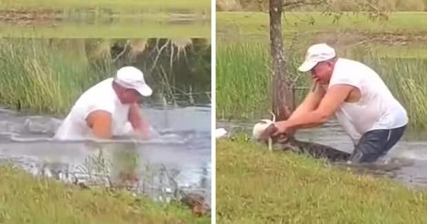 74-летний мужчина спас щенка из пасти аллигатора