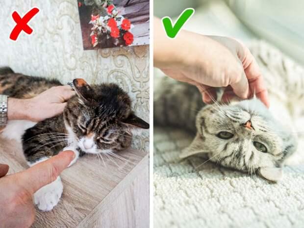 9 воспитательных приемов, которые превратят вашего вредного домашнего хищника в ласкового пушистика