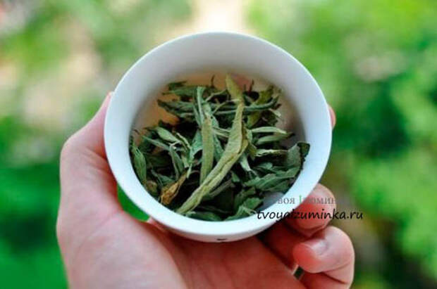 listya-stevii