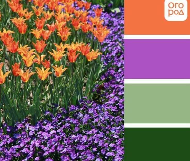 клумба с оранжевыми и фиолетовыми цветами, сад в фиолетово-оранжевых цветах