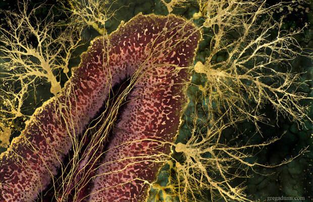 Графический процессор головного мозга: ода мозжечку