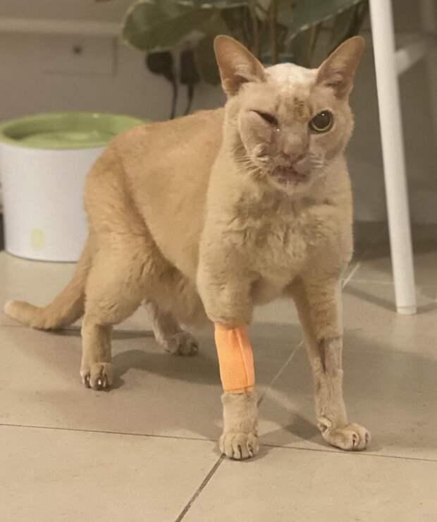 Самое страшное: морда твоего кота после лечения у ветеринара