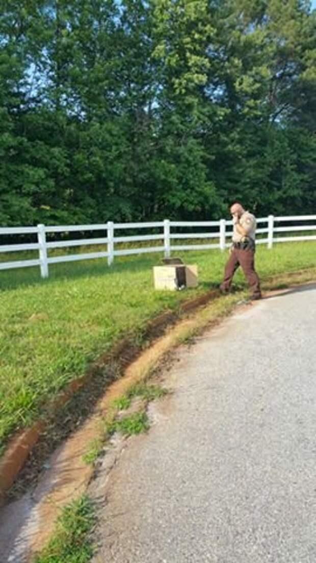 Полицейский нашел 10-недельного щенка в коробке на обочине дороги