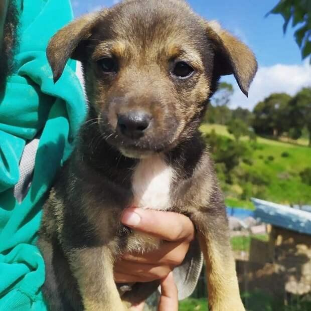 Грустная история щенка из приюта растрогала соцсети