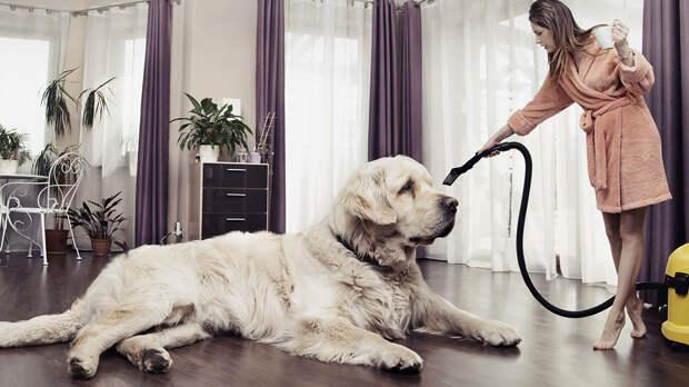 Белые и пушистые: топ-6 больших собак со светлой шерстью и их особенности