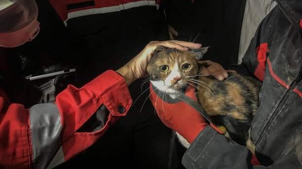 Собака спасла кошку из-под завалов после землетрясения в Турции