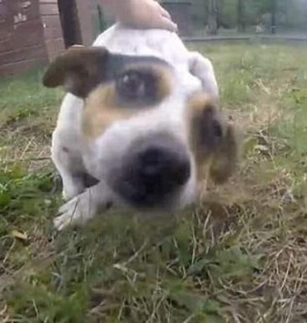 Волонтеры спасли пса, который почти уже разучился ходить