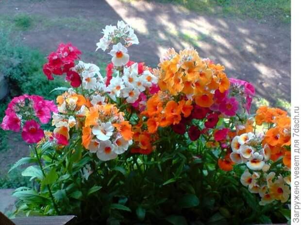 Вот цветок