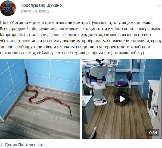 Экзотическая змея приползла на приём к стоматологу на улице Академика Бочвара
