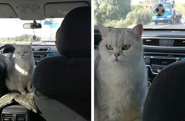 Личный опыт автопутешествия с кошками на дальние расстояния.