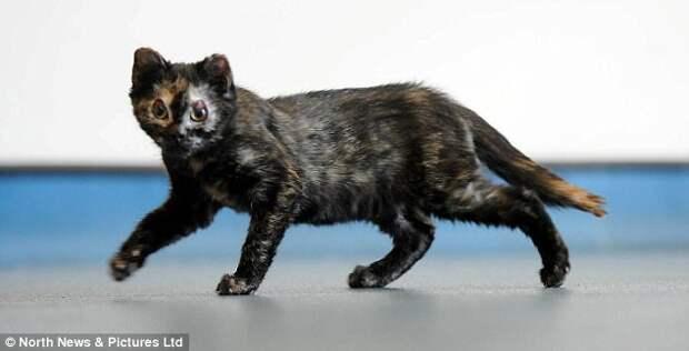 В Великобритании котенок чудом выжил после пожара и идет на поправку