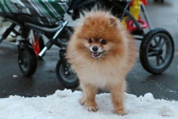 В РАН объяснили запрет Ким Чен Ына жителям КНДР держать собак