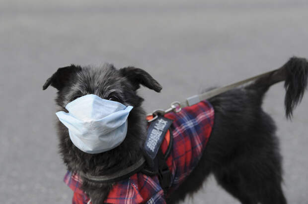 Кошки и собаки могли стать источником британского штамма коронавируса