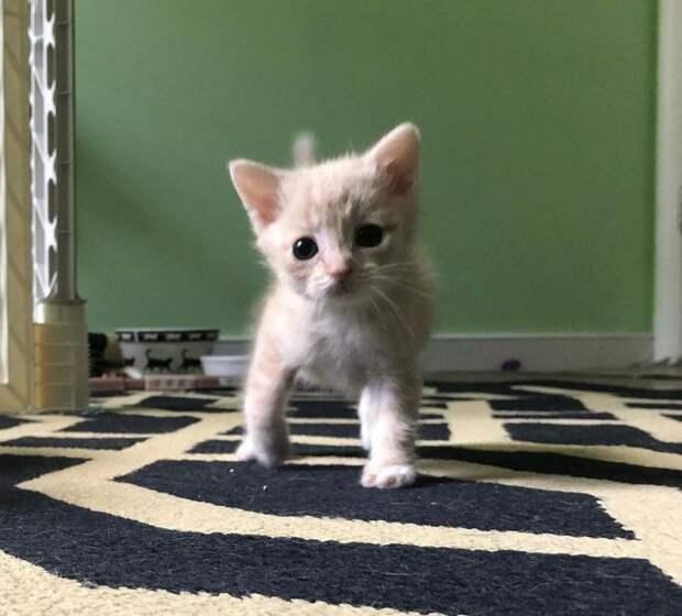 Волонтеры не думали, что малышка с кривыми лапками выживет  история спасения, коты, котята, кошки, мило, спасение животных, трогательно