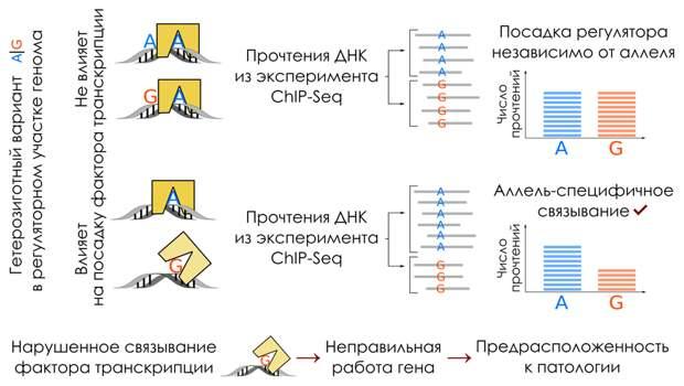 Пористые наночастицы помогут эффективнее доставлять лекарства длительного действия