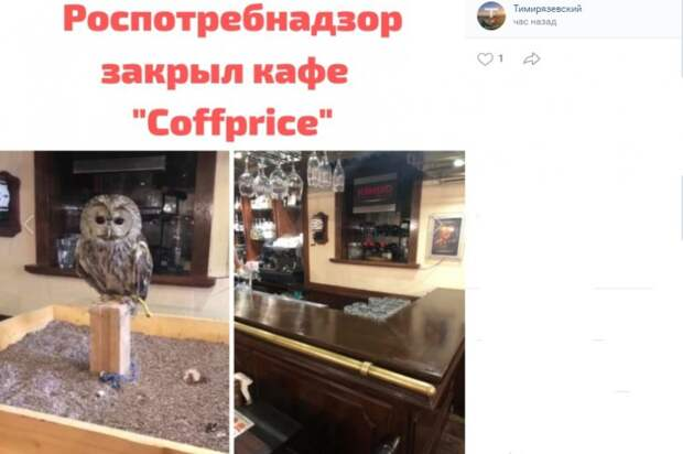 Роспотребнадзор закрыл совиное кафе на Тимирязевской