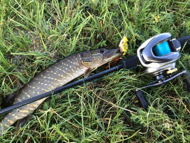 Лягушачьи рыбалки