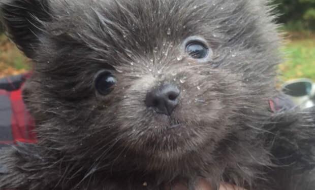 Семья купила щенка, а через год решила показать ветеринару. Весь год люди растили медведя