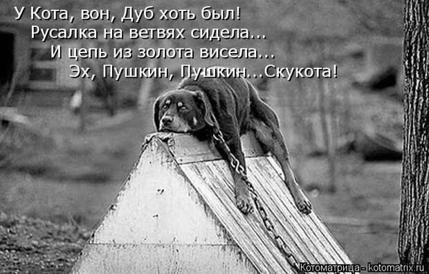 Котоматрица: У Кота, вон, Дуб хоть был! Русалка на ветвях сидела... И цепь из золота висела... Эх, Пушкин, Пушкин...Скукота!