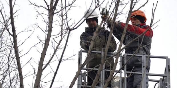 На улице Демьяна Бедного удалили аварийные деревья