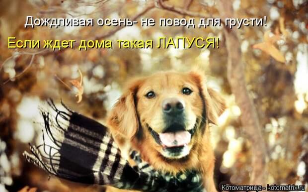 Котоматрица: Дождливая осень- не повод для грусти! Если ждет дома такая ЛАПУСЯ!