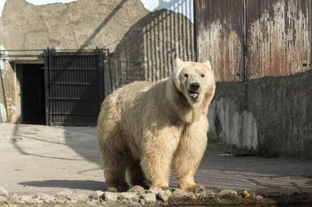 «Неужели зима?» Так проходит первая зима медведя на воле…