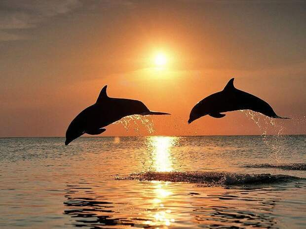 Самые удивительные факты о дельфинах