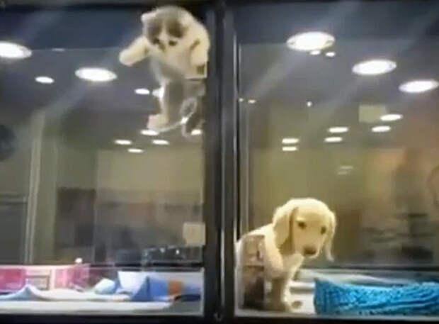 Щенку стало грустно ночью в зоомагазине, и вот что для него сделал его друг котенок...
