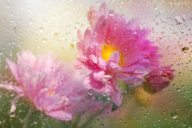 Фотографии цветов от Makushina Tatyana