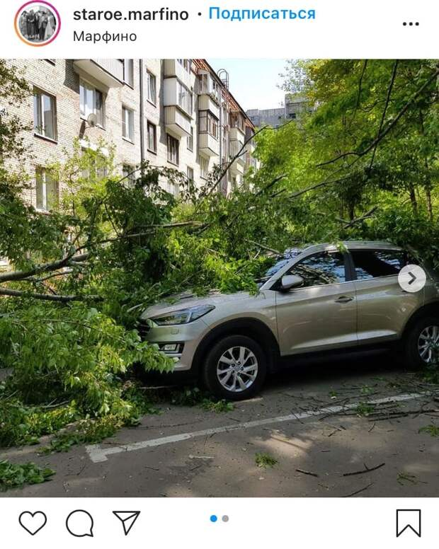 На Академика Комарова дерево упало на машину из-за сильного ветра