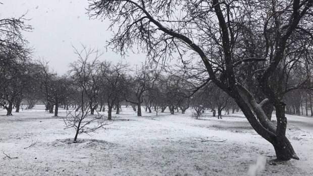 Устойчивый снежный покров образуется в Москве в конце ноября
