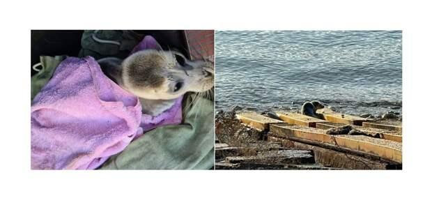 Тюлененка в тяжелом состоянии обнаружили на берегу в Актау
