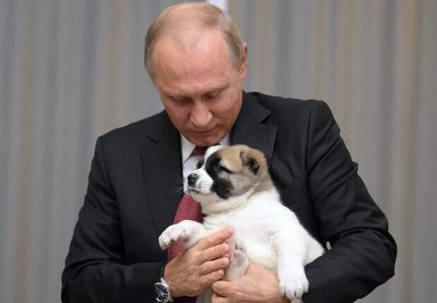 Путин поручил обеспечить учет домашних животных