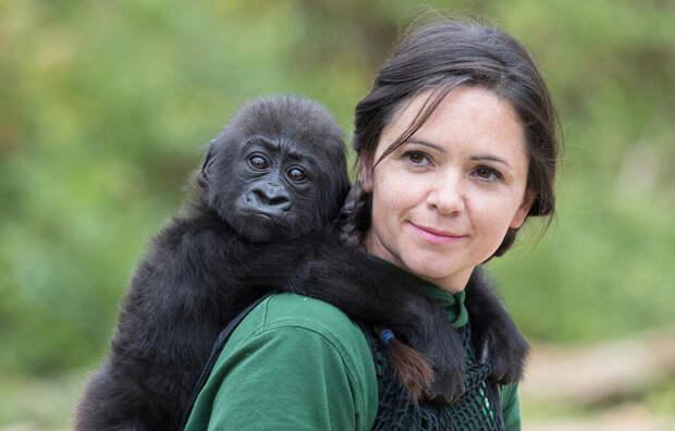 Девушка с детенышем гориллы