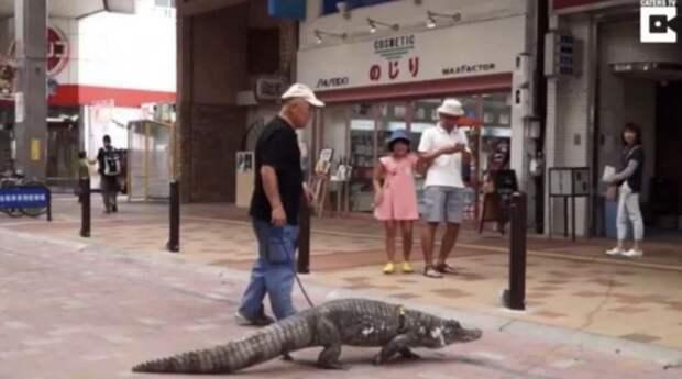 В семье из Японии уже 39 лет живет настоящий крокодил