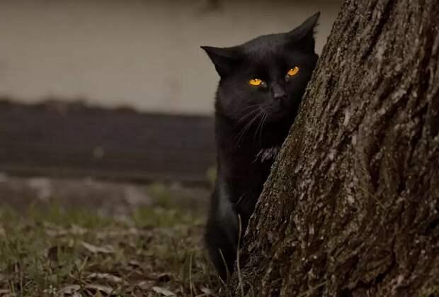 История о том, как кошки сквозь стены проходили