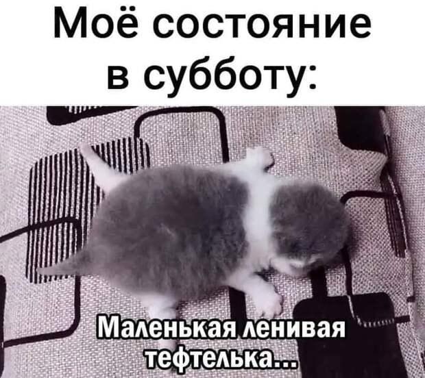 Возможно, это изображение (кот и текст «моё состояние в субботу: маленькая ленивая тефтелька...»)