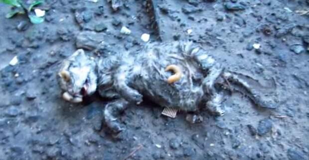 После дождя мужчина нашел в грязи едва живого котёнка покрытого слизнями