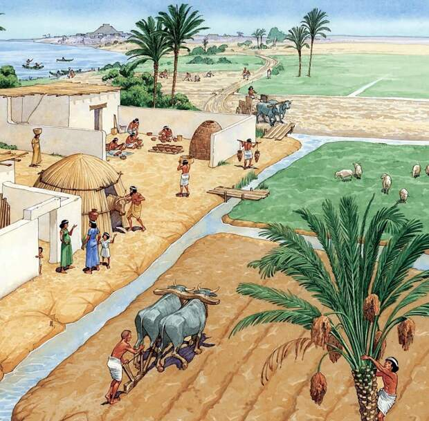 Выращивание зерна вызвало к жизни государство