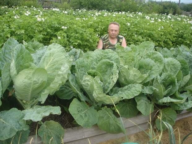 Удивительный огород Виктора Лядова