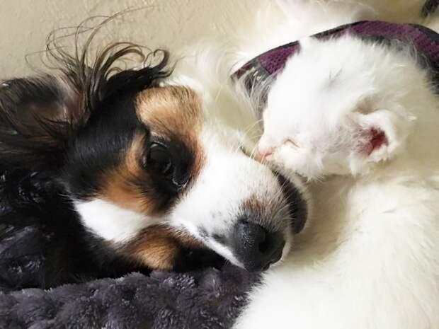 Трогательная история о том, как собака помогает больному котенку